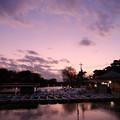 石神井池 ボート乗り場