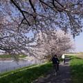 桜並木のサイクリング♪
