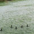写真: 五羽の侍