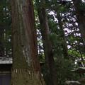 一の宮神社の巨木