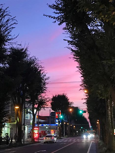 ケヤキ並木の街道夕景