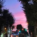 写真: ケヤキ並木の街道夕景