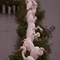 写真: 夕刻の白鷺ライン