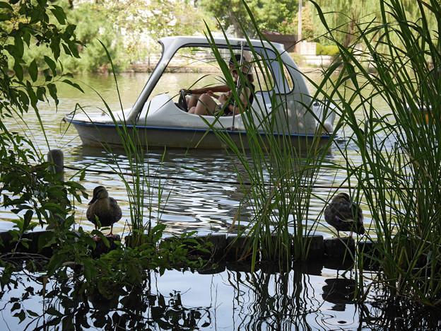 水上から野鳥遊覧♪