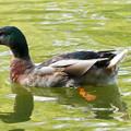 緑映す池でゆったりと