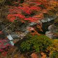 秋の中津川渓流