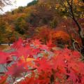 秋のカーブ 547be-m