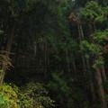 杉山 556b-m