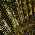 杉急斜面つづら折り595b-m