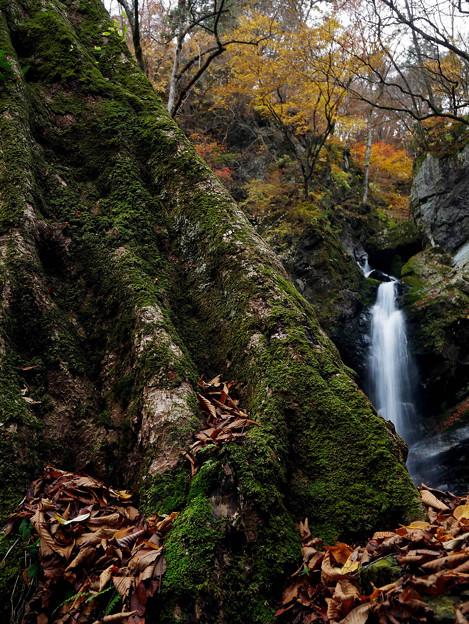 巨木と不動滝 686e-m