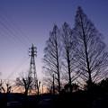 写真: メタセコイアと鉄塔