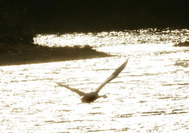光の川を越えて