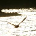 写真: 光の川を越えて