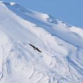 Photos: 富士登山道をバックにトビ