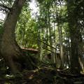 Photos: 山の神社