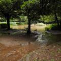 池の水があふれてる