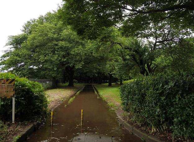 歩道が川に(^^;;
