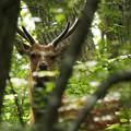 Photos: 鹿さん?!
