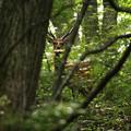 Photos: 森の奥に何か居る