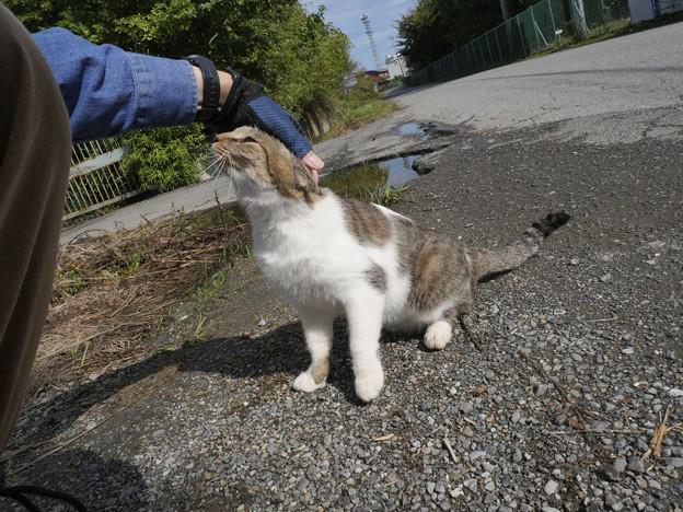 飼い猫のごとし(=^^=)