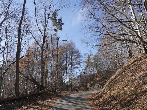 林道徒歩で登る
