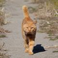 Photos: 近づいてくる猫