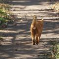 歩き去る猫