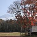 Photos: 限定的に鮮やかな紅葉に的を絞って秋を楽しもう