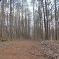 13 信濃路自然歩道~遅い春