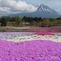 15  富士山と芝桜富士