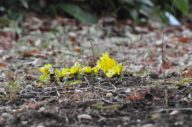Photos: あしもとに春が来た