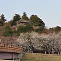 写真: 季節やわらぐ 偕楽園1