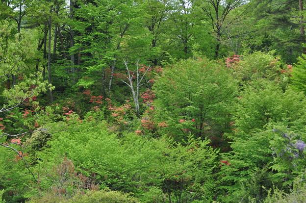 GW(4/30) 新緑と花々