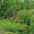 写真: GW(4/30) 新緑と花々