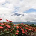写真: シェービング富士