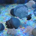 写真: 水底の宝石