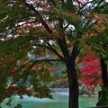 写真: 紅葉狩のはずが 5 名栗湖