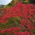 Photos: 紅葉狩のはずが 6 ようやく