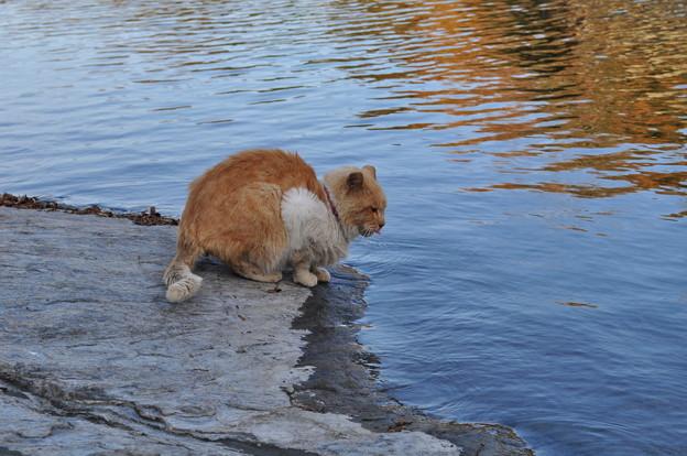 Photos: 長瀞の天然水