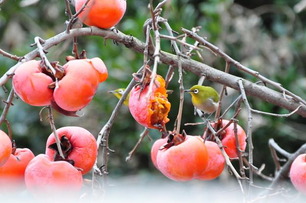 柿メジ×2