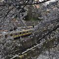Photos: 中 桜 線