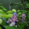 Photos: 袖傘雨