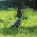 Photos: 鳥001