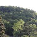 写真: 渡月橋からの風景♪
