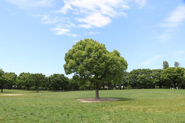 このぉ木なんの木♪