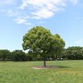 写真: このぉ木なんの木♪