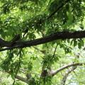 写真: 木陰で一休み♪