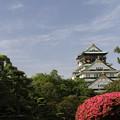 写真: 大阪城♪