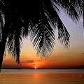 マニラ湾椰子の葉陰