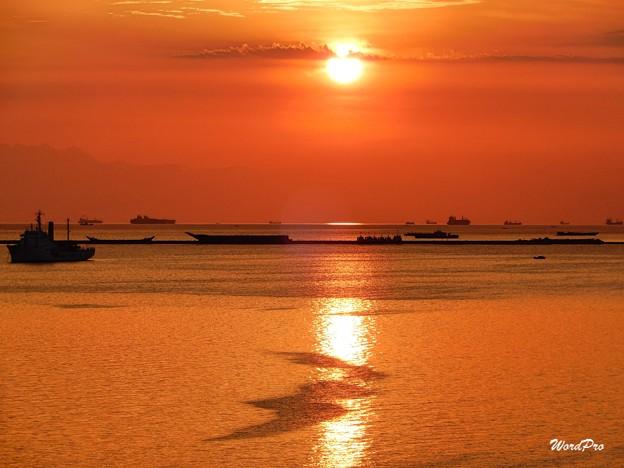 魚群の夕陽